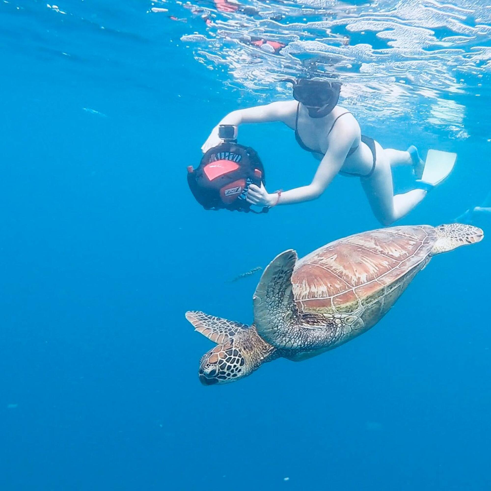Turtle Sea Scooter Safari with Ariki Adventures Rarotonga