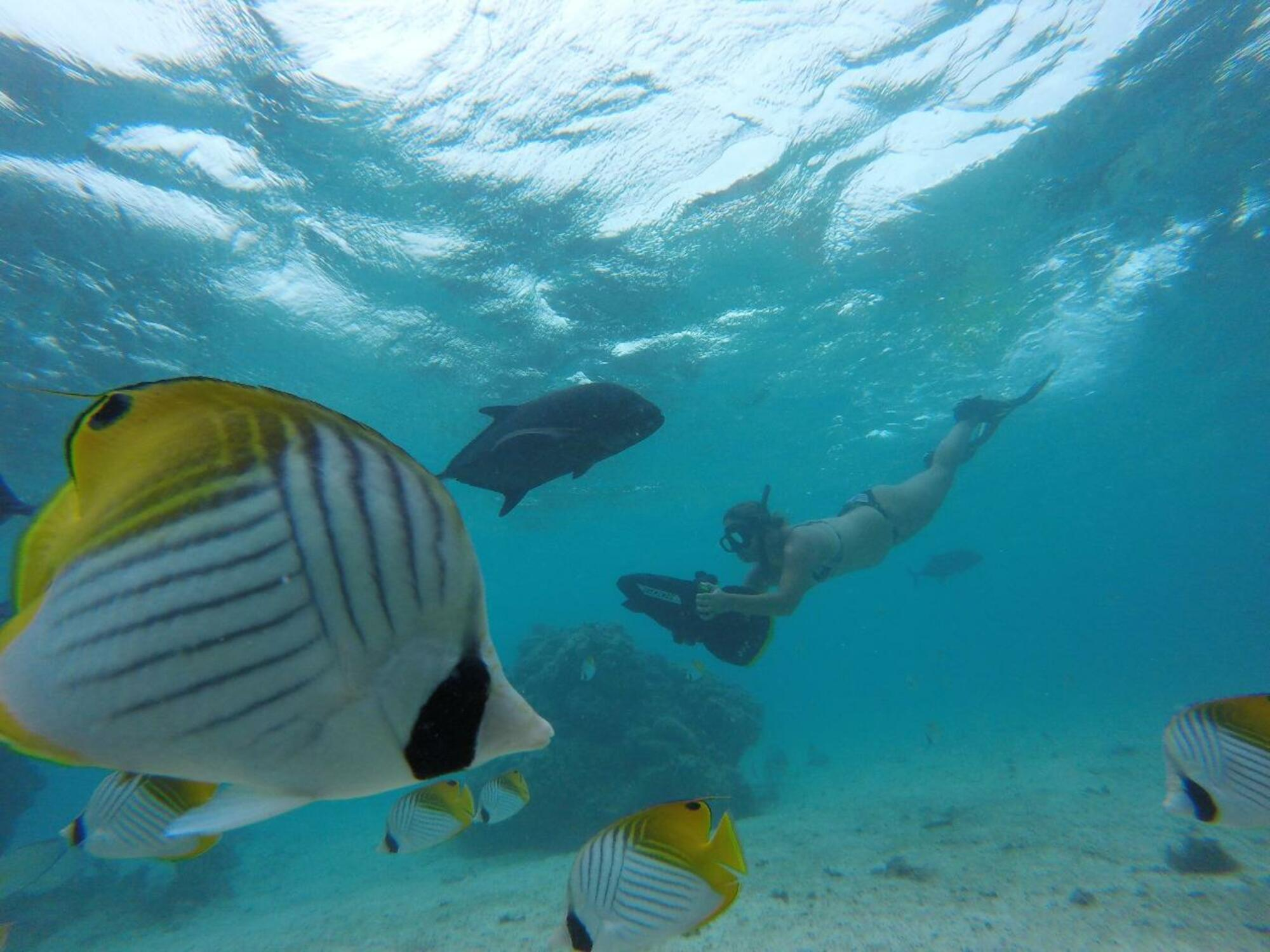 """Tai"" Sea Scooter Snorkel Tour with KiteSUP Watersports Cook Islands"