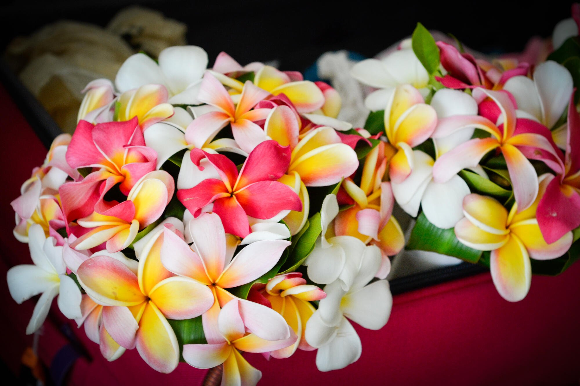 Tropical Island Weddings at Edgewater Resort & Spa Rarotonga