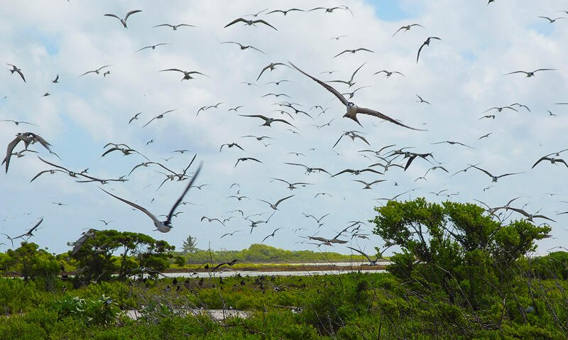 A Birds flying at Bird Island  Suwarrow 2
